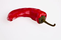 A red hot chilli pepper. Stock Photography