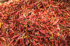 Red hot chilli pepper, Sri Lanka Royalty Free Stock Images