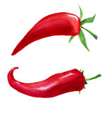 Red hot chilli pepper on white background. Red hot chilli pepper watercolor vector set on white background royalty free illustration