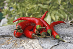Free Red Hot Chilli Peppers Stock Photo - 9734090