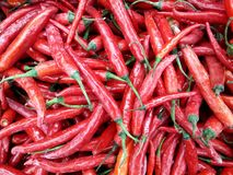 Red hot chilli peppers. royalty free stock photography