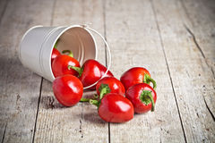Red hot chilli peppers in little bucket Royalty Free Stock Images