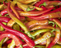Red hot chilli peppers for sale Stock Photography