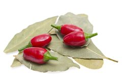 Red hot chilli peppers on white background Stock Image