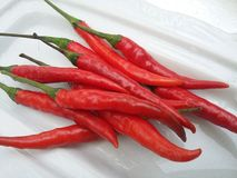 Red hot chilli on white background Royalty Free Stock Photos