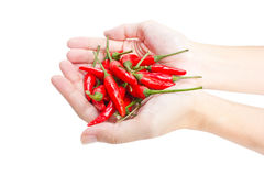 Red hot chillies pepper in hand. Royalty Free Stock Images