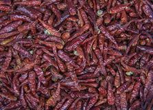 Red hot chilly peper Stock Photos