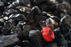 Red hot coal nugget on focus on other cold raw nuggets of coal. Background of raw coals with soft focus exclusion with color and temperature royalty free stock image