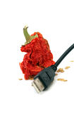 Red hot dried pepper and usb Royalty Free Stock Photo