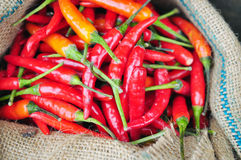 Red hot fresh chili pepper in burlap sack Royalty Free Stock Images