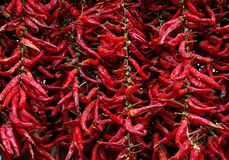 Red hot pepper. Close up of red hot pepper Royalty Free Stock Photo