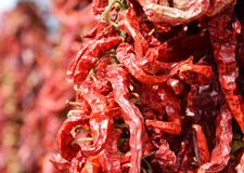 Red hot pepper background Stock Image