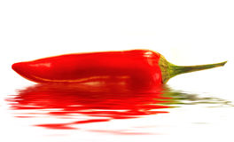 Red Hot Pepper Isolated Stock Photos