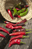 Red hot chili pepper in summer sunlight Royalty Free Stock Image