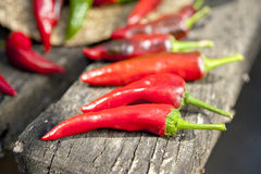 Red hot chili pepper in summer sunlight Royalty Free Stock Photography