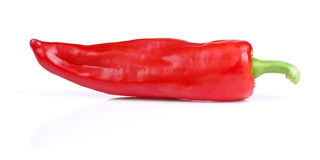 Red Hot Pepper  on white Royalty Free Stock Photo