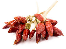 Red hot pepper on white background Stock Photos