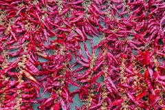 Red hot peppers close up. Chili peppers close up. Spicy organic ingredients. Healthy cooking. Spicy food background. Royalty Free Stock Photos