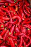 Red, hot peppers. Full frame of red, hot peppers background - heap of red, hot peppers in cardboard box ready for sale Stock Photos