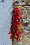 Red hot peppers hanging on the wall. Royalty Free Stock Photography