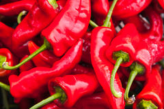 Red hot peppers lay on the counter, close-up Stock Images