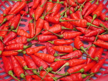 Red hot spicy chilli in busket. Red chilli in busket Royalty Free Stock Photos