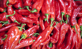 Red hot spicy organic hungarian peppers as a background Royalty Free Stock Image