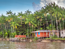 Red house. On the Amazon River with acai palm - Belem - Brazil Royalty Free Stock Photos