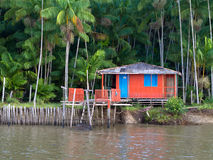Red house. On the Amazon River with acai palm - Belem - Brazil Stock Photography