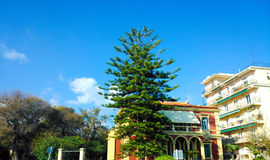 Red house and a green tree. In Corfu island Greece Royalty Free Stock Images