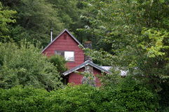 Red House. An old red house sits behind a wall of green foliage Stock Photography