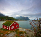 Red house and sea. Typical isolated red house in the lofoten islands with grass on the roof. Near the village of reine by a cloudy day Royalty Free Stock Photography