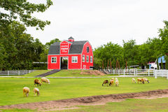 A red house in the sheep farm Royalty Free Stock Photo