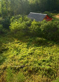 Red house on swamp. Rural landscape. Red house on swamp (view from above Stock Image