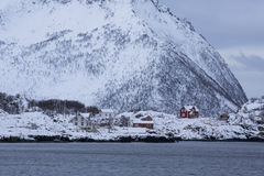 Red houses near Bergsfjorden-shoreline Royalty Free Stock Photo