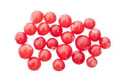 Red huckleberries royalty free stock photos