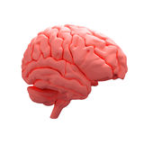 Red human brain Stock Images