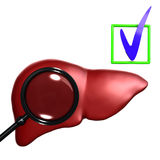 Red  Human liver with mesoscope Royalty Free Stock Images