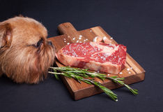 The red hungry dog tries to steal a piece of marble meat from the table. Steak ribeye with spices on a wooden board stock photography