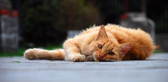 Red hunter. Homeless cat. Photo taken on the street stock photos