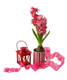 A red hyacinth with red lantern isolated. A decorative composition with burning lantern and red hyacinth on white background Royalty Free Stock Image