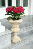 The red hydrangea in ceramic pot Stock Photography