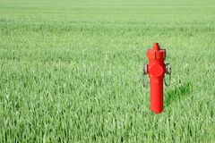 Red hydrant in a green field Royalty Free Stock Images