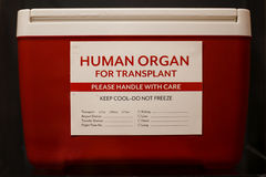 Red ice chest with label stating Human Organ for Transplant Royalty Free Stock Image
