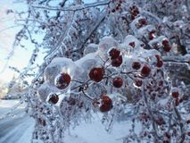 Red berries and and ice covered twigs with snowy road stock images