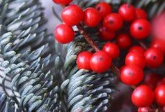 Red ilex berries royalty free stock photo
