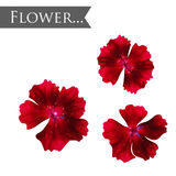 Red isolated flower. Vector element for your design stock images