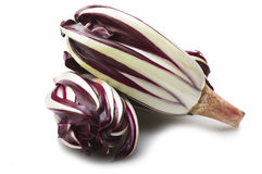 Red italian radicchio chicory. From Treviso close up Royalty Free Stock Photos