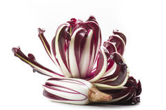 Red italian radicchio chicory. From Treviso close up Stock Images