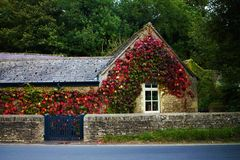 Red ivy covering a honey stone Bibury cottage Royalty Free Stock Images